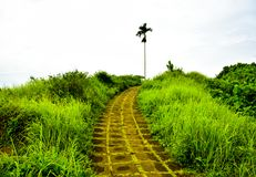 Groen van het regenwoud tropisch wildernis en voetpad meningsavontuur in Oost-Azië stock fotografie