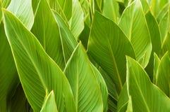 Groen van kleurenbladeren schot als achtergrond Stock Afbeelding