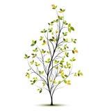 Groen vectorboomsilhouet met bladeren Stock Afbeelding