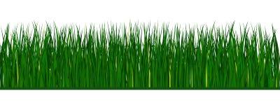 Groen vectorgras Stock Afbeeldingen