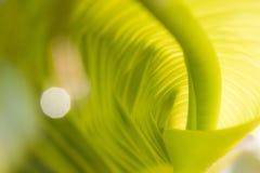 Groen verdraaid blad stock foto's