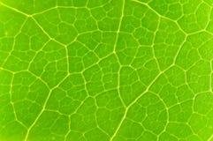 Groen verlof Stock Afbeeldingen