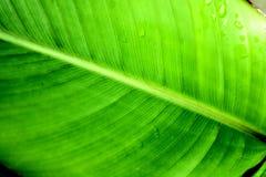 Groen verlof Stock Foto's
