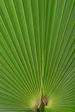 Groen verlof Stock Foto