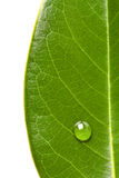 Groen verlof en waterdruppeltje Royalty-vrije Stock Foto's