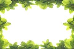 Groen verlofkader Royalty-vrije Stock Foto