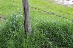 Groen, vers en het gezonde gras van de lente? stock fotografie