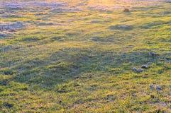 Groen, vers en het gezonde gras van de lente? Stock Afbeelding