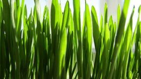 Groen vers gras Royalty-vrije Stock Foto
