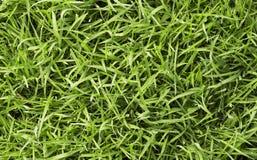 Groen vers gras stock afbeeldingen