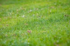 Groen Vers Gras Vroege Ochtend royalty-vrije stock afbeeldingen