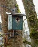 Groen Vogelhuis op een Boom stock afbeelding