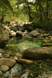 groen water Royalty-vrije Stock Foto's