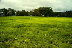Groen weiland Stock Foto's