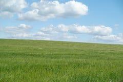 Groen weiland met blauwe hemel   Royalty-vrije Stock Foto