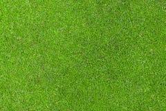 Groen werpen Stock Fotografie