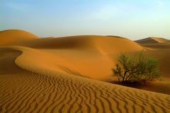 Groen in woestijn Stock Foto's