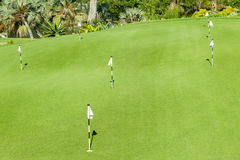 Groen Zetten van de Cursus van het golf Stock Foto