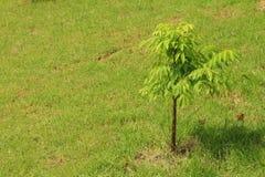 Groende är det nya livet av gröna plantor Royaltyfria Bilder