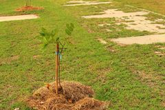 Groende är det nya livet av gröna plantor Fotografering för Bildbyråer