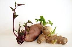 groende Arkivfoton