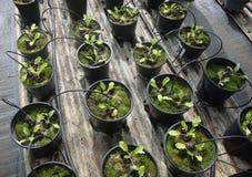 Åkerbruk groende Royaltyfria Bilder