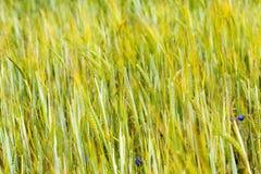 groene aar stock foto