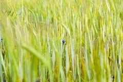 groene aar stock fotografie