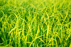Groene aard stock foto's