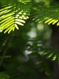 Groene aard bokeh achtergrond of achtergrond Stock Afbeeldingen