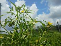 Groene aard en gele bloem royalty-vrije stock afbeeldingen