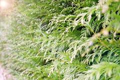 Groene aardachtergrond Planten-achtergrond royalty-vrije stock fotografie