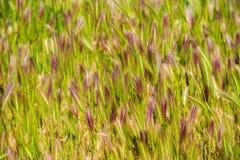Groene aartjes Close-up Stock Afbeelding