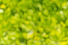 Groene Abstracte Achtergrond De textuur van het verlof Royalty-vrije Stock Foto's