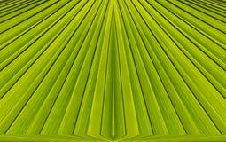 Groene abstracte achtergrond van bladpatroon Stock Foto