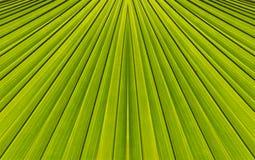 Groene abstracte achtergrond van bladpatroon Stock Afbeelding