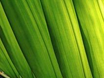 Groene achtergrond royalty-vrije stock foto's