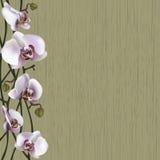 Groene achtergrond met witte orchideebloemen Stock Foto