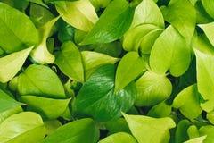 Groene achtergrond van bladeren stock foto's