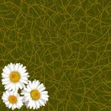 Groene achtergrond van gras en bloemen van kamille in hoek Royalty-vrije Stock Afbeeldingen
