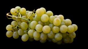 groene achtergrond van natuurlijke druif Royalty-vrije Stock Foto