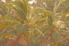 Groene achtergrond van palmen Exotische Tropische Achtergrond Palm of bosje, hoogste mening van palmen Behang met palmen royalty-vrije stock foto