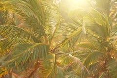 Groene achtergrond van palmen Exotische Tropische Achtergrond Palm of bosje, hoogste mening van palmen Behang met palmen royalty-vrije stock afbeeldingen