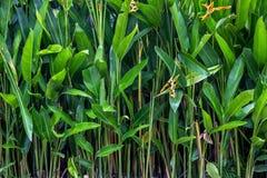 Groene achtergrond van tropische installaties Stock Foto