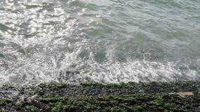 Groene algen op een steentreden op het overzees of de oceaankust stock videobeelden