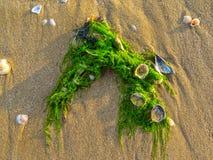 Groene algen op een zandig strand Stock Afbeeldingen