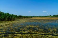 Groene algen op oppervlakte van het meer stock afbeelding