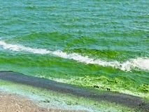 Groene algenverontreiniging op een rivier Dnieper royalty-vrije stock afbeelding