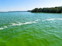 Groene algenverontreiniging op een rivier Dnieper stock foto's