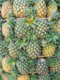 Groene ananas Royalty-vrije Stock Foto